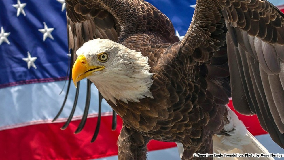Famous Bald Eagle to Visit Marion Saturday